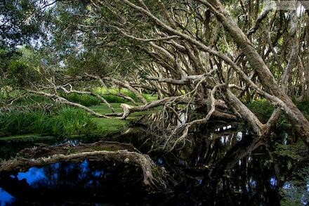 Swamp, Lake Ainsworth Sport and Recreation Cente, Lennox Head, NSW