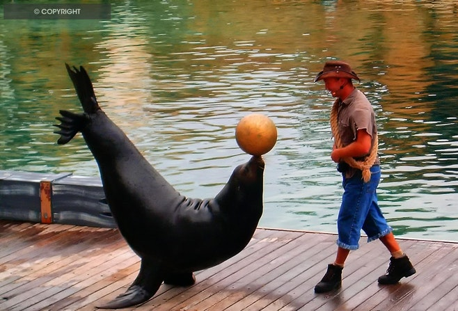 HPIM1683- seal - Seal Show  sea World