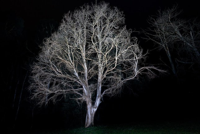 Resilience 2 - Using direct flash has isolated this skeletal Marysville tree from its background