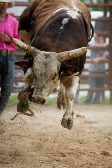bull riding April27-6071