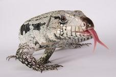 Reptiles Alive Studio