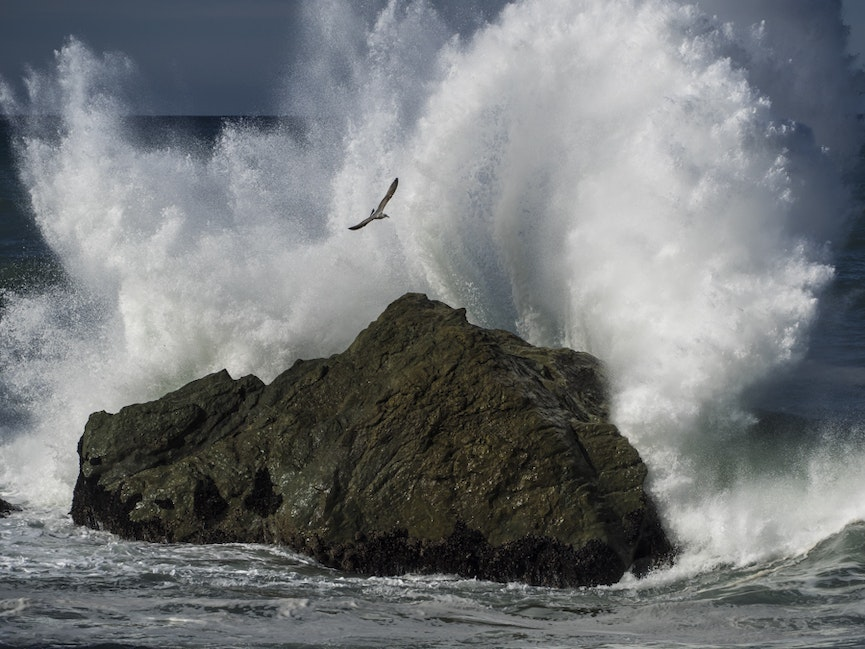 Exploding Wave and Sea Gull - Gulls were attracted to the crashing waves off Black Sand Beach