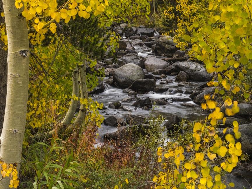 Bishop Creek Aspens - Aspens turning on the south fork of Bishop Creek below South Lake