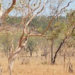 Arnhem Land, Northern Territory. - Beginning the dry season around may 2016 this area will be open for limited tourism. Tourist will be able to camp, fish...