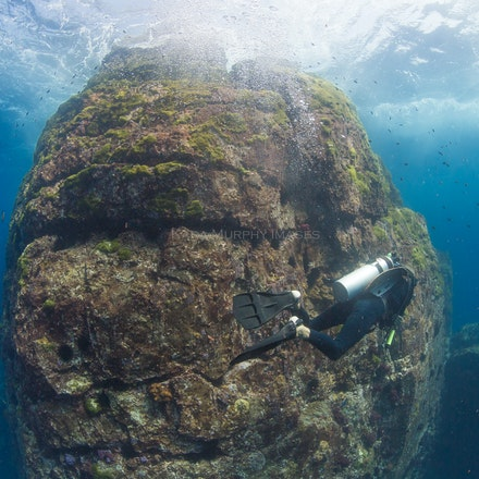 Diver, Western Rocky 2 - A diver explores the Western Rocky dive site.