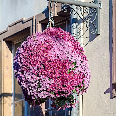 240 - Strasbourg - 101216-4052-Edit