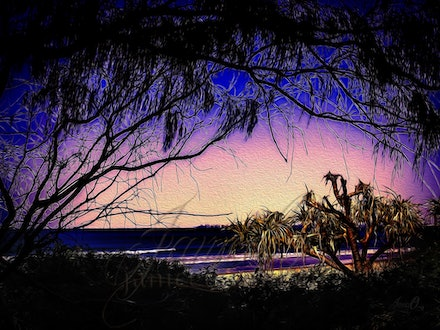 Hanging On - An old Pandanus tree on a Gold Coast Beach.