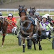 Kilcoy Harness 23 08 15 - Photos then by Michael McInally