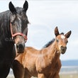 Foal Photography