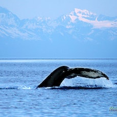 Alaska Panoramas 2015 - Panoramic images from a cruise of Alaska's Inside Passage in May 2015.