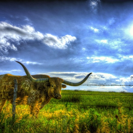 No Bull    7.10.2015.1 - No Bull. On a Keith County, Nebraska farm, an intimidating stare is all this guy needs to let everyone know they are in his territiory....