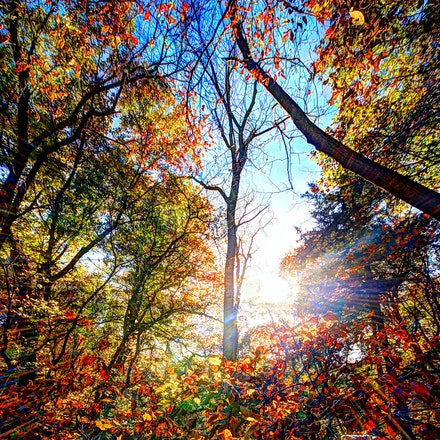 Rush of Leaves 10.25.2015.2 - Rush of Leaves. An army of colorful fall foliage blows through Platte River State Park in Eastern Nebraska. #nebraska #tree...