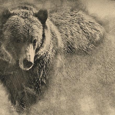Bear Pencil 30x40