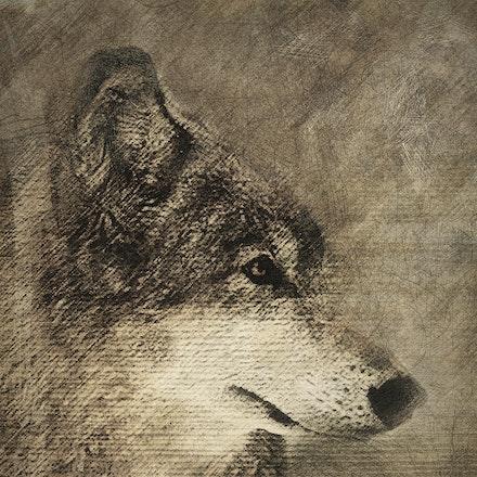 Rustic Wolf Pencil 24x36