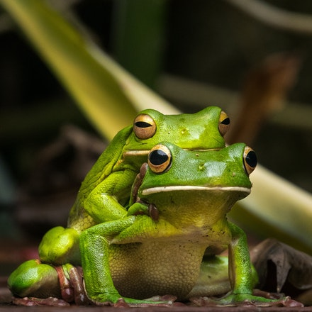 Get a room - A private moment between two frogs.
